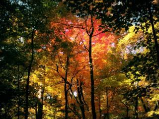 обои Осень на деревьях фото