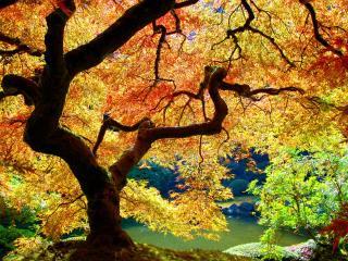обои Под могучим осенним деревом фото