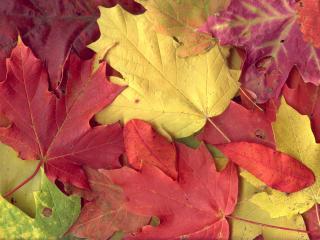 обои Разноцветные осенние листья фото