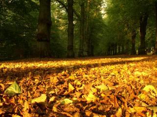 обои Сухие осенние листья под ногами фото
