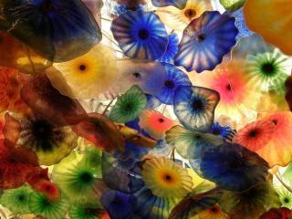 обои Много разноцветных медуз фото