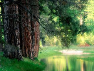 обои Чудесный пруд в летнем лесу фото