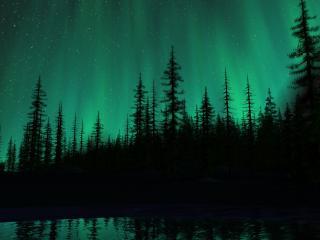 обои Магический звездный лес фото