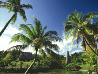 обои Пальмы,   бунгало и тропический лес фото