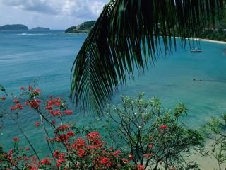 обои Ветка пальмы над морем фото