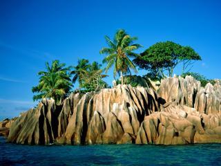 обои Пальмы на скалах острова фото