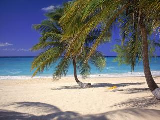 обои Изогнутые пальмы на пляже фото