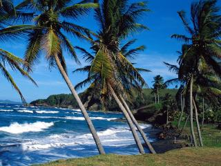 обои Волны набегают на тропический берег фото
