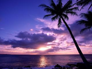 обои Обворожительный закат в тропиках фото