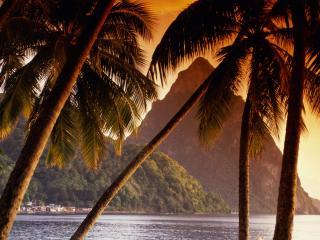 обои Пальмы,   освещенные Солнцем фото