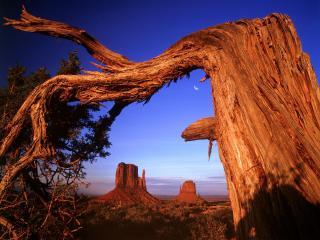 обои Арка из изогнутого дерева, летом в каньоне фото