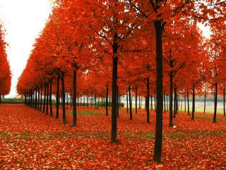 обои Осенний парк,  листопад фото