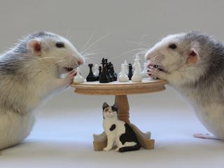 обои Шахматная партия фото