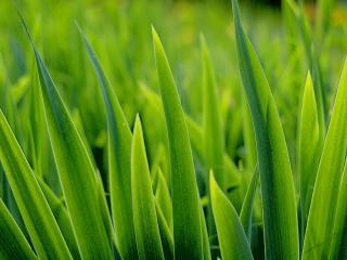 обои Зеленая зеленая трава фото