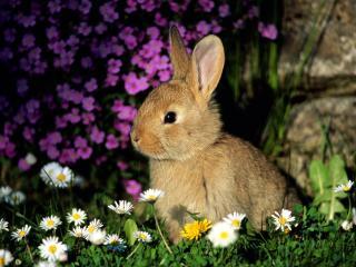 обои Заяц в цветах фото