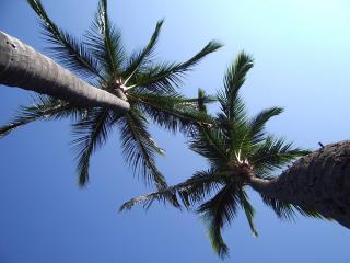 обои Вид снизу на пальмы фото