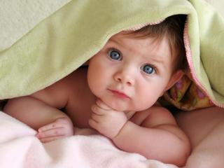 обои Любопытный взгляд из под одеяла фото
