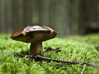обои Гриб в дождевом лесу фото