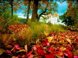 обои Осенняя листва в лесу фото