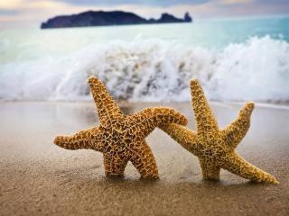 обои Морские звезды фото
