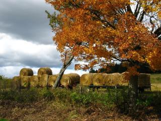обои Осенний пейзаж, дерево, небо фото