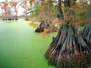 обои Осенние деревья в пруду фото