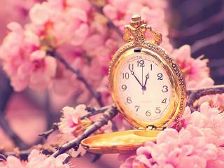 обои Золотые часы на ветви сакуры фото