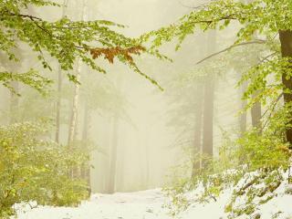 обои Ранний снег фото