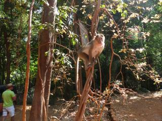 обои Откормленная обезьянка фото