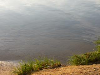 обои Травка на берегу у воды фото