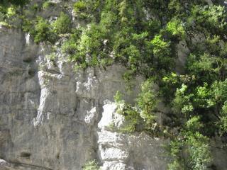 обои Деревья на скалах фото
