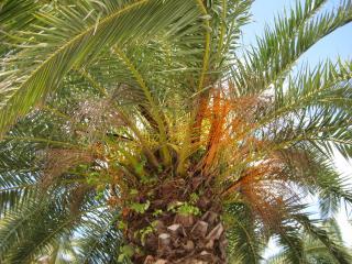 обои Пальма в близи фото