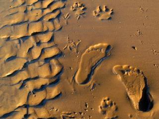 обои Следы на влажном песке фото
