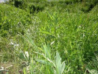 обои Зеленая трава на склоне фото