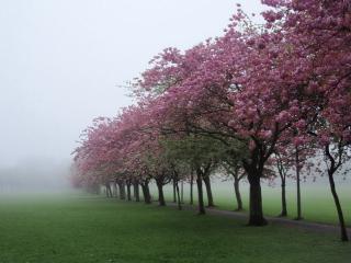 обои Весенние деревья в цвету фото