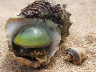 обои Моллюски на  песке фото