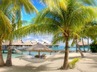обои Тропический берег с пальмами фото