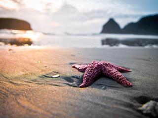 обои Морская звезда на песке фото