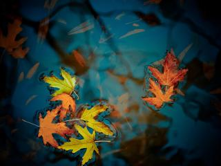 обои Желтые листья в воде фото