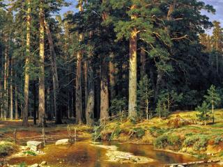 обои Река и сосновый бор фото