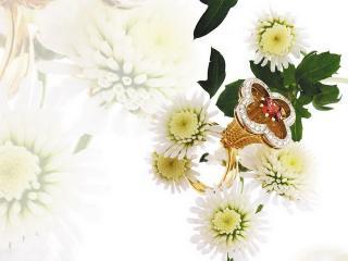 обои Кольцо в окружении белых цветов фото
