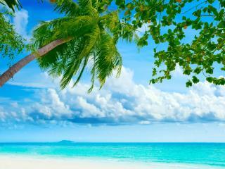 обои Тропический берег на экваторе фото