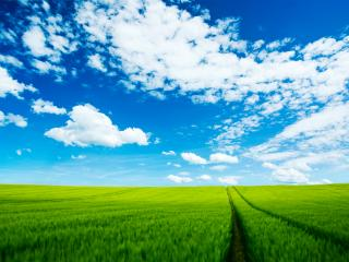 обои Дорога на зеленом лугу фото