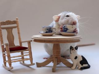 обои Мышиное чаепитие фото