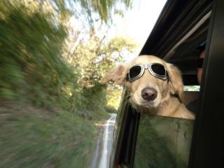 обои Предполётная подготовка собак фото