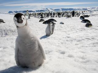 обои Обитатели антартиды в сборе фото