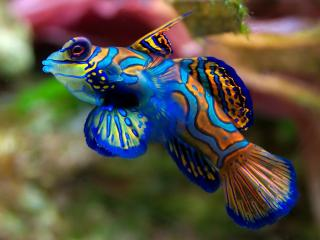 обои Цветная рыбка фото