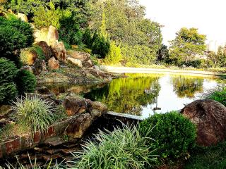 обои Маленький пруд в парке фото