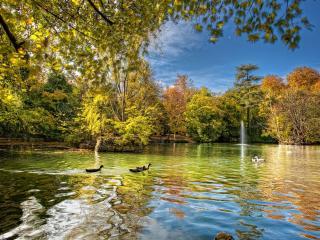 обои Красивый осенний сквер,   утки в пруду фото