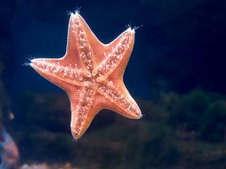 обои Красивая морская звезда на стекле фото